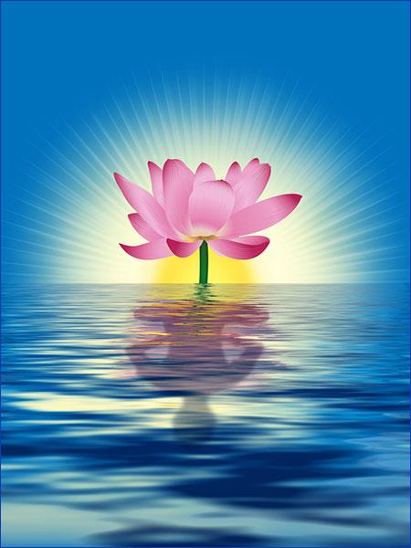 Sérénité du lotus